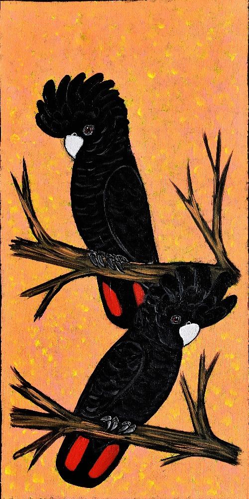Red Tail Black Cockatoos - KBZG0563
