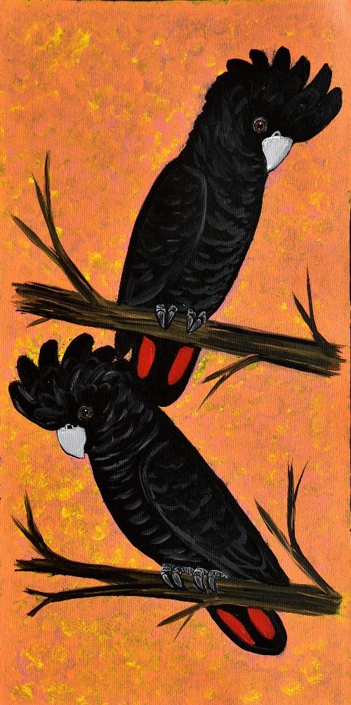 Red Tail Black Cockatoos - KBZG0564