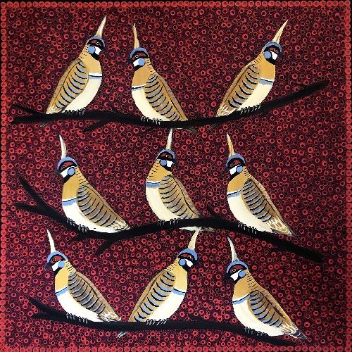 Spinifex Pigeons - KBZG0596