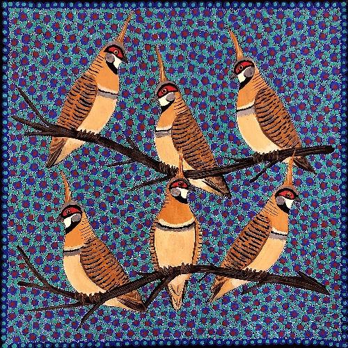 Spinifex Pigeons - KBZG0612