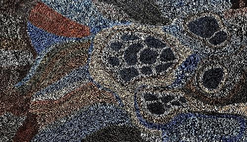 Mud Mussels - RMMG0044