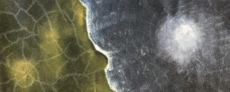 Earth Elements - SKIG0660 by Sarrita King