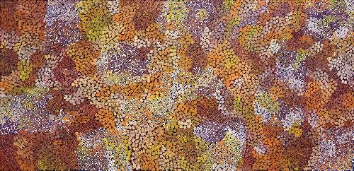 Akatyerre - Bush Tomato - STPAP2192668